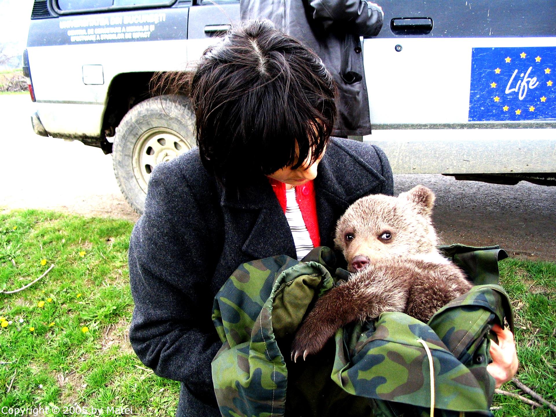 Reabilitare ursi orfani