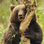 brosura+bear+friendly+FINAL_mic_romana-5